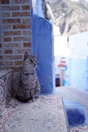 Beautiful Cats in Chef